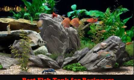 Best Fish Tank for Beginners