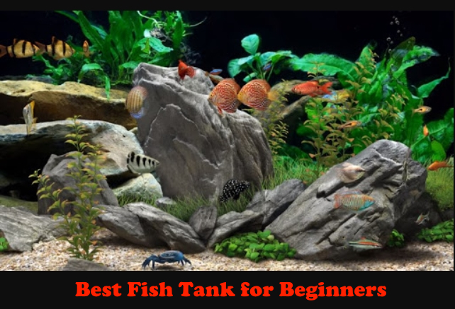 The Best Fish Tank for Beginners Reviews of 2020