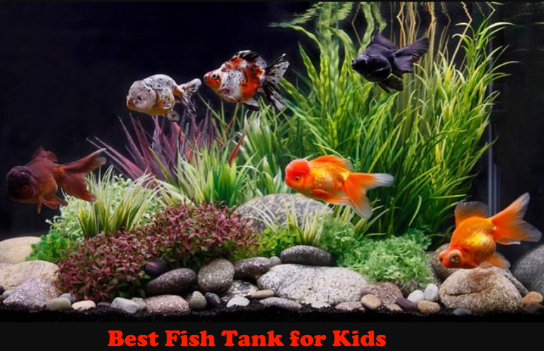 Best Fish Tank for Kids Reviews of 2020