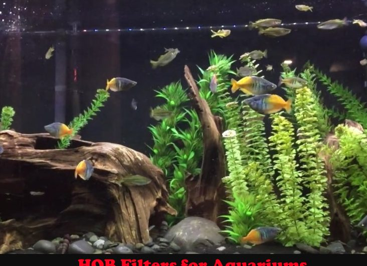The Best HOB Filters for Aquariums